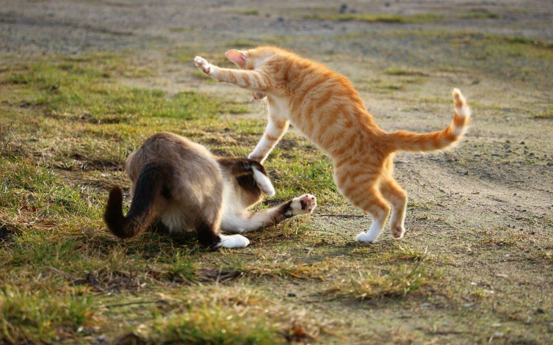 How Do You Break Up a Cat Fight?