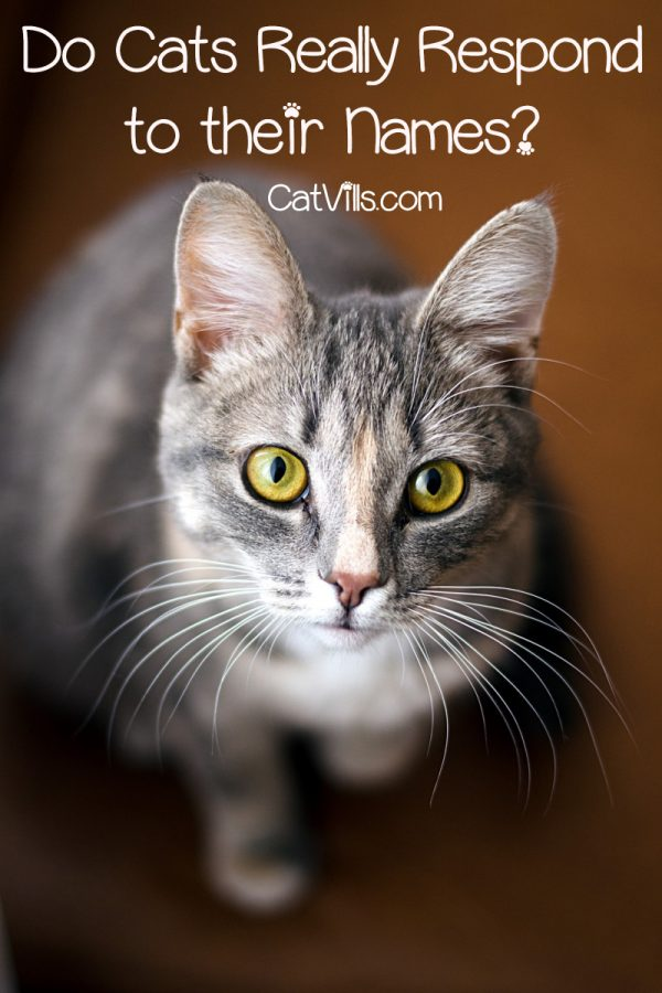 Do cats really respond to their names? You spend a lot of time picking out the perfect cat name, so you want them to actually understand it! Find out why they will or won't come when you call!