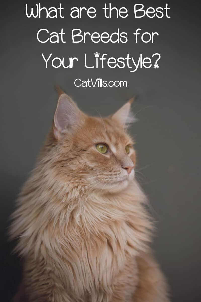 What are the best cat breeds? That depends entirely on your lifestyle and needs! Read on to find out our top choice for every age and stage of your life.