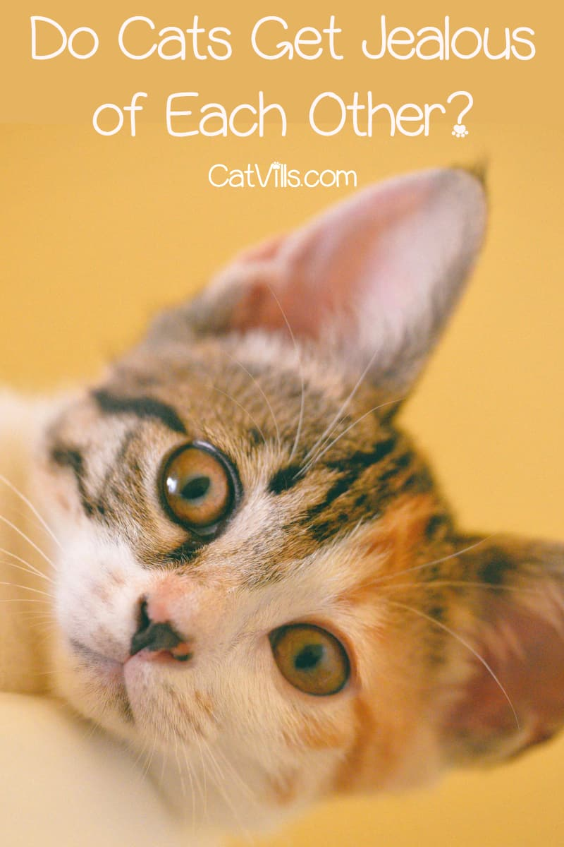 close-up shot of a cute cat with wide eyes and spotted nose