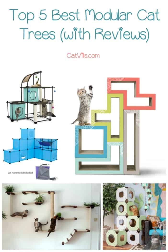Modular cat trees are great both for those who are tight on space & those who want to build a huge gym for their kitties. Check out our top 5 favorites!