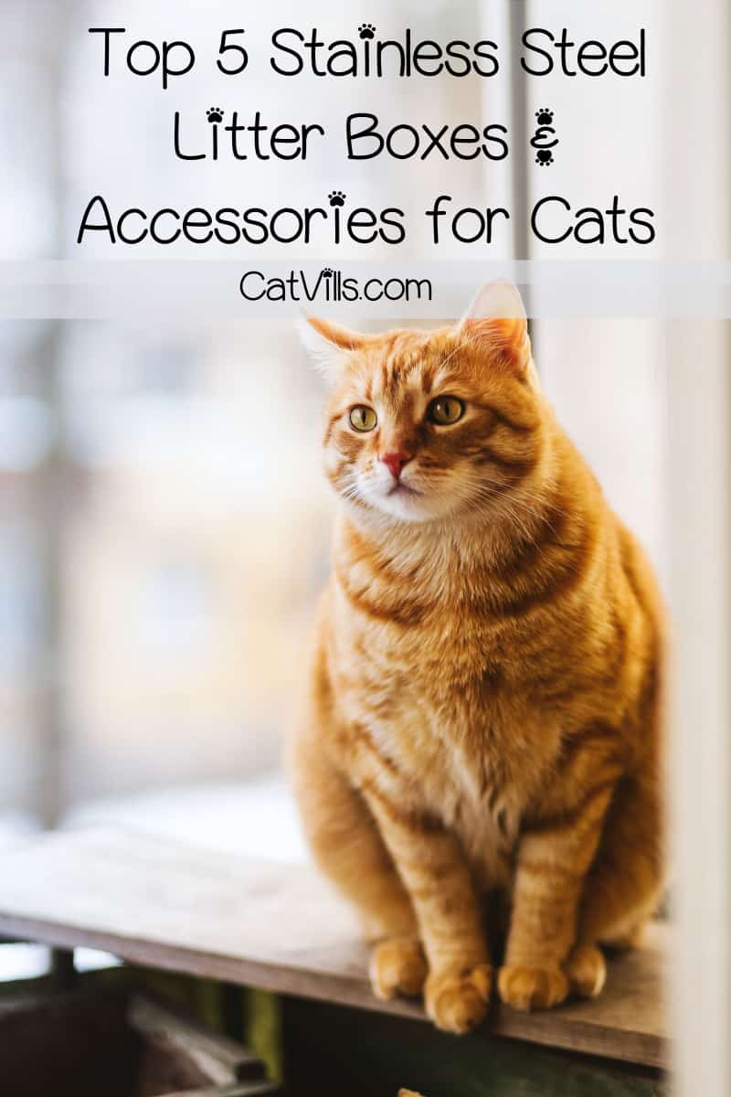 Thinking about switching to a stainless steel litter box for cats? Read on for the best options for those who want to make the switch from plastic to steel.