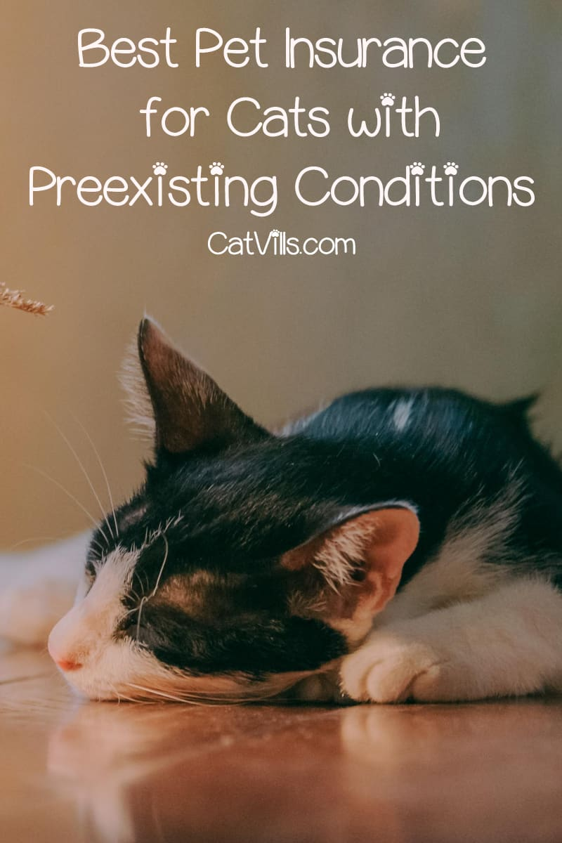 Need pet insurance for cats with preexisting conditions? I have good news and bad. Read on to find out if any exist & what to do if they don't.