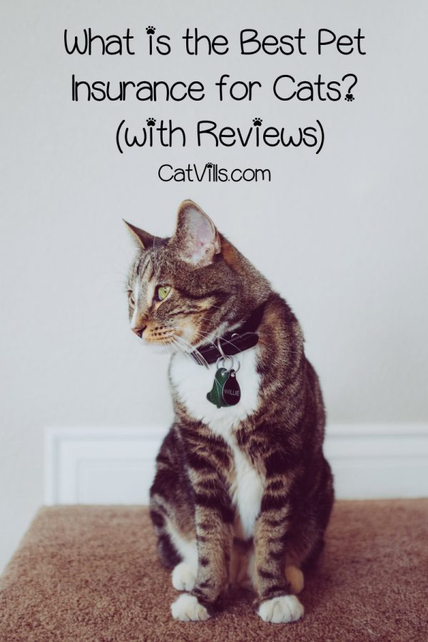What is the best insurance for a cat? That's a tricky question that depends on many factors, but we narrowed it down to the top 3. Check it out!