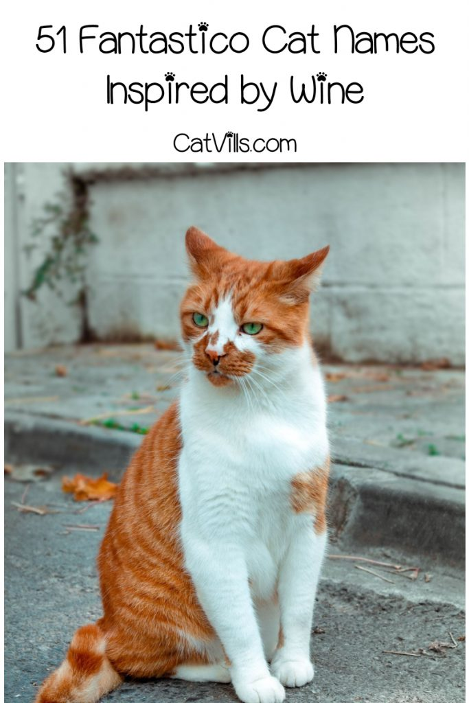 an orange and white cat on the street