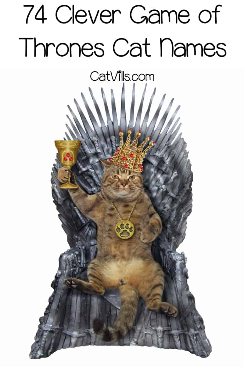 If you're searching for some awesome Game of Thrones cat names, we've got your back! Read on to discover 74 clever ideas for both male and female kitties!