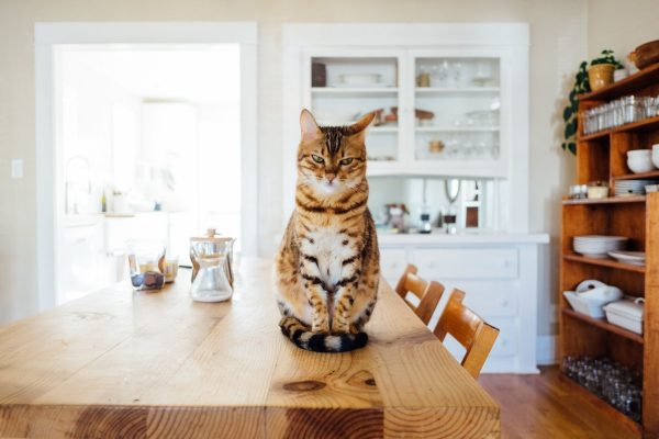 Is cat insurance worth it? Read on to find out the average cost and benefits of pet insurance for cats to find out the answer!