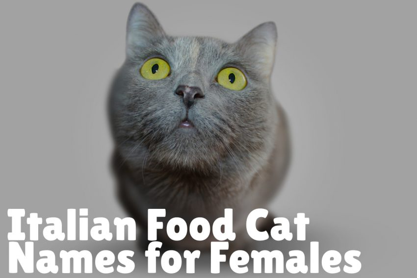 FEMALE ITALIAN FOOD NAMES FOR CATS