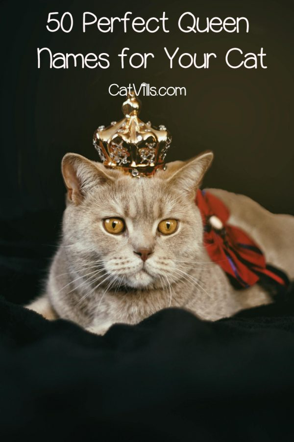 Looking for some fantastic queen names for cats? Read on for 50 royal names from all around the world and throughout history!