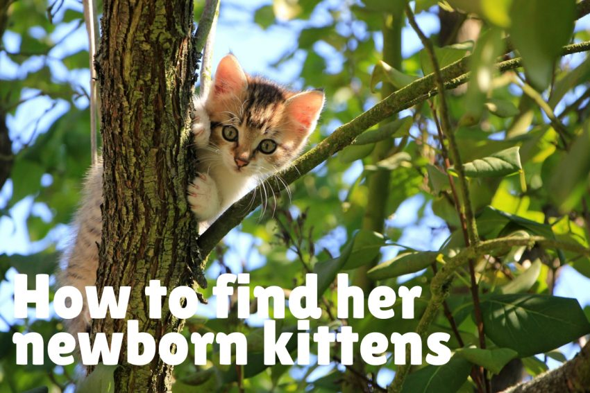 kitten outside climbing a branch of the tree