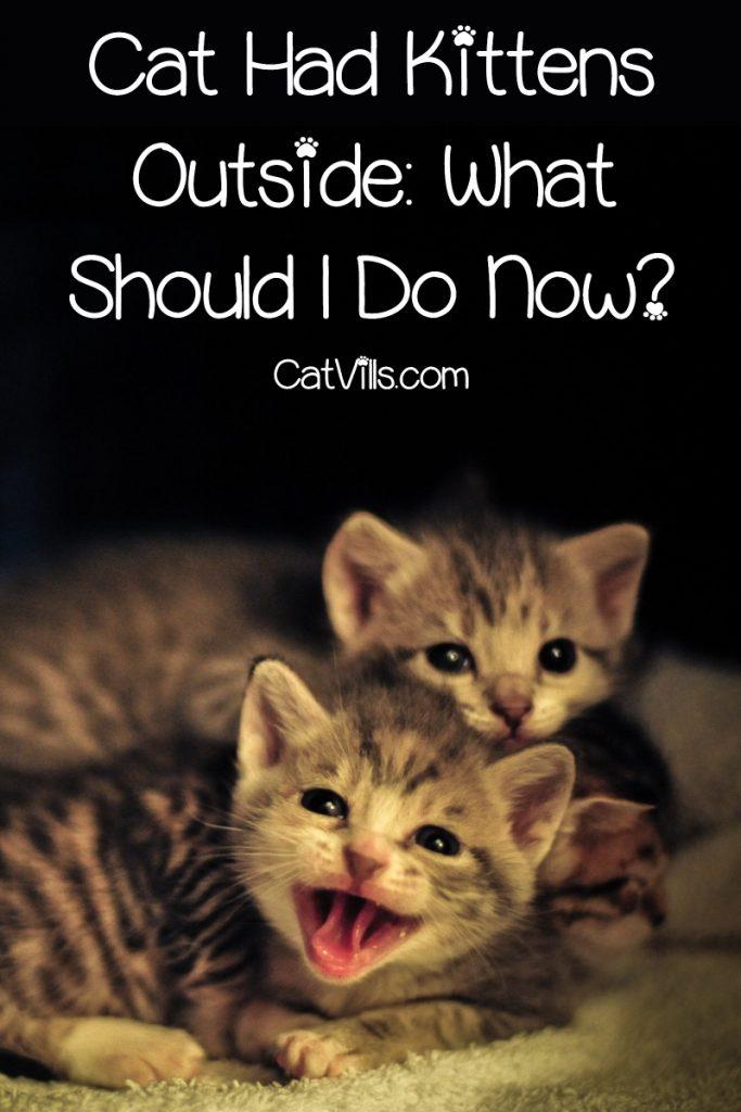 3 new born kittens outside
