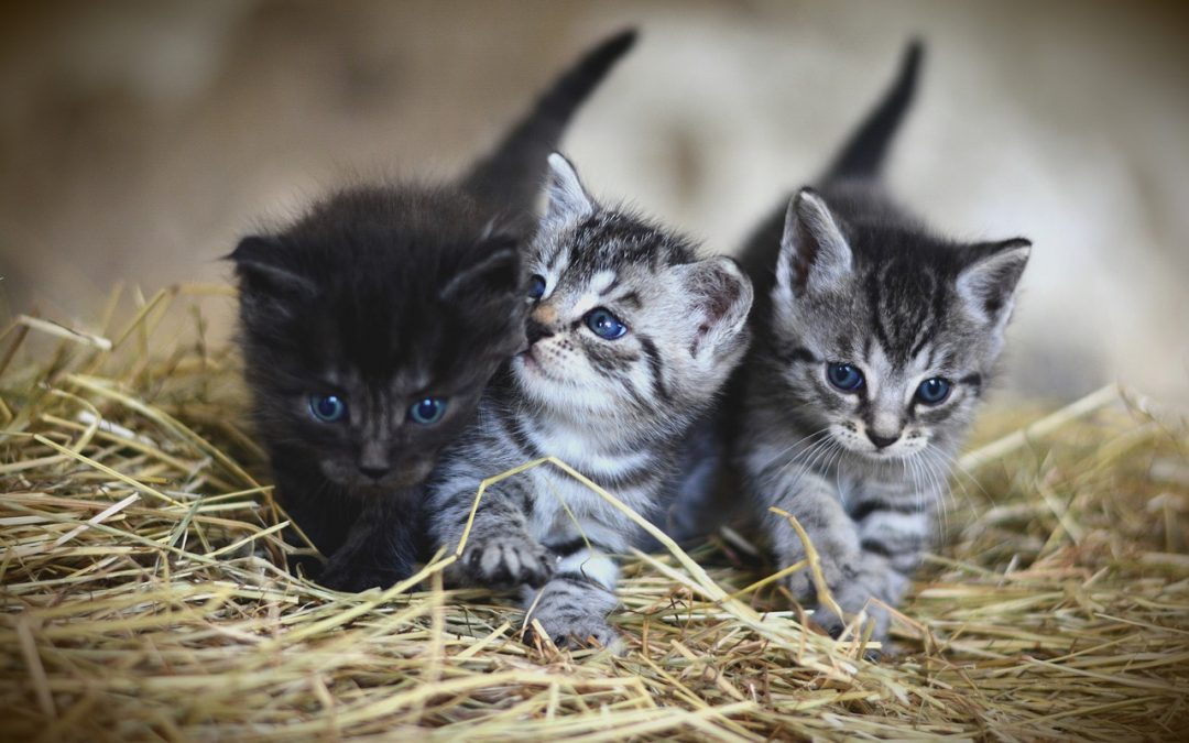 Cat Had Kittens Outside – Where They Hide Them and Why