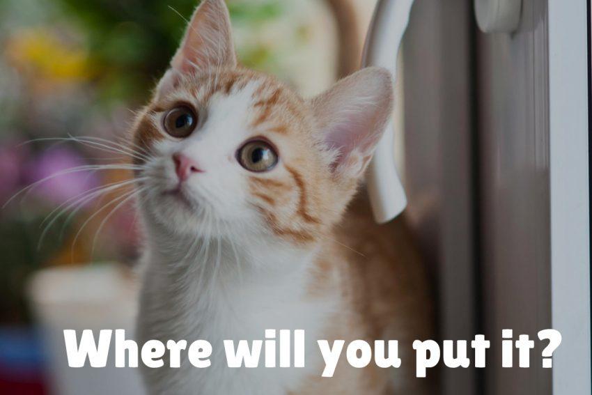 orange cat staring