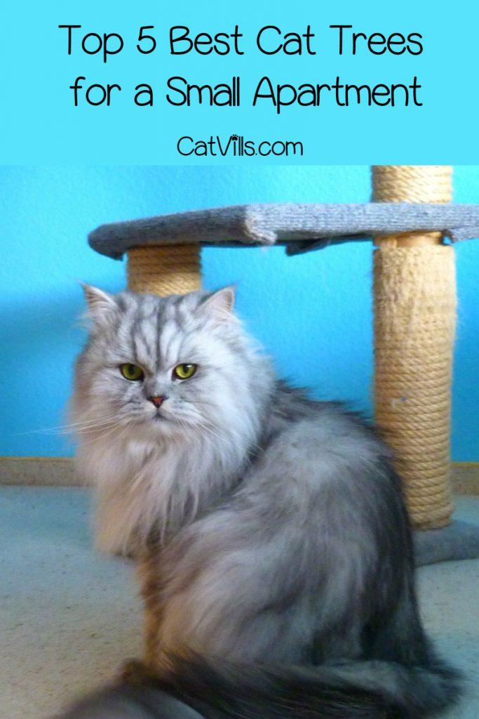 persian cat standing beside his cat tree