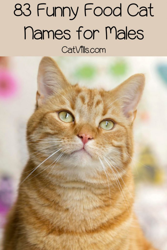 Looking for funny food cat names for your male kitty? Check out 83 that we love, then keep reading for female food names for cats, too!