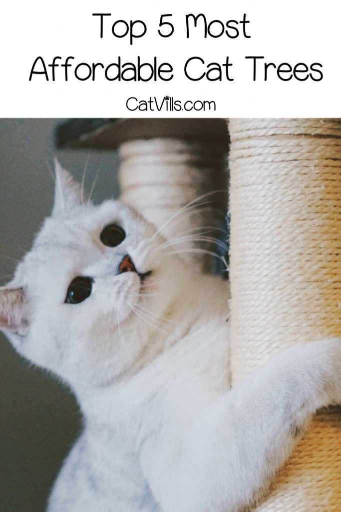 Looking for the most affordable cat trees that give you the biggest bang for your buck? Check out the top 5 with the best value compared to price!