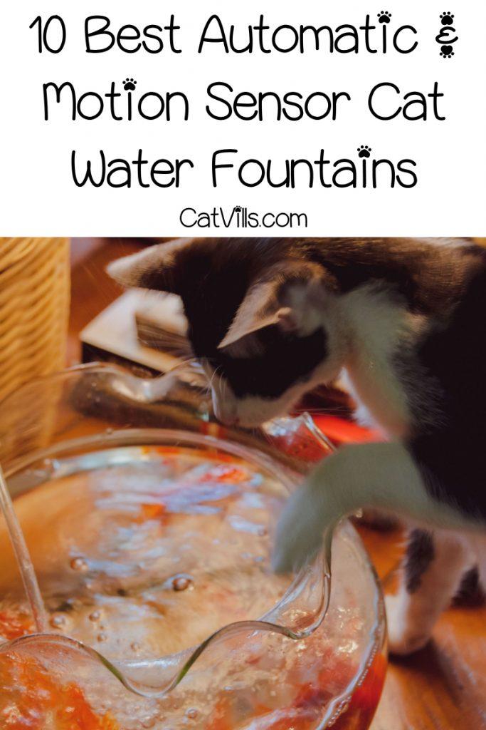 cat touching a water fountain