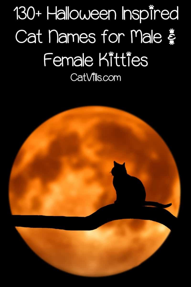 130 Halloween Inspired Cat Names For Male Female Kitties Catvills