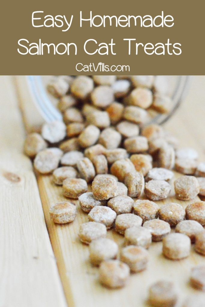 Want to try your hand at making your own kitty treats? Start with this easy homemade salmon cat treats recipe! Check it out!