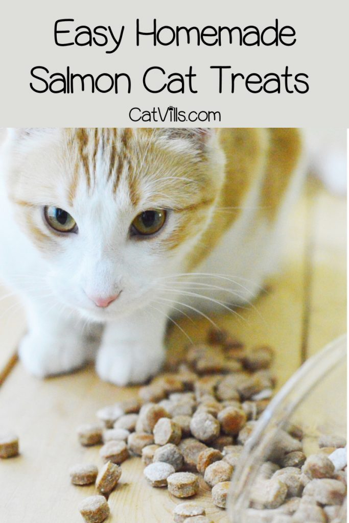 If you want to try your hand at making your own kitty treats, our salmon cat treats recipe is a great place to start!