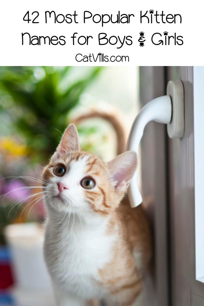 a cat staring somewhere beside a door's knob