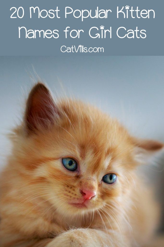 an orange kitten with a sign of