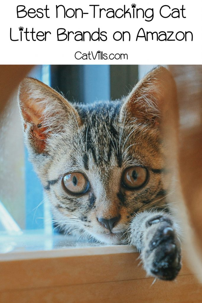 If you're tired of finding gross little kitty paw prints all over your home, you definitely need to check out these top 5 best non-tracking cat litter brands on Amazon!