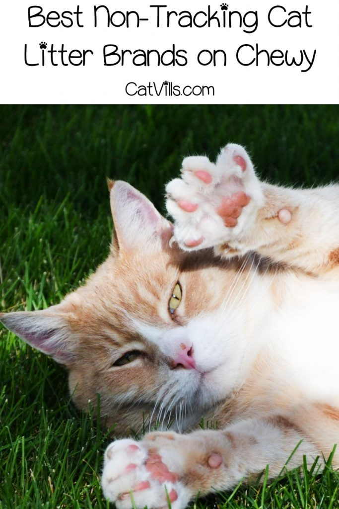 If you're tired of finding gross little kitty paw prints all over your home, you definitely need to check out these top 5 best non-tracking cat litter brands on Chewy!