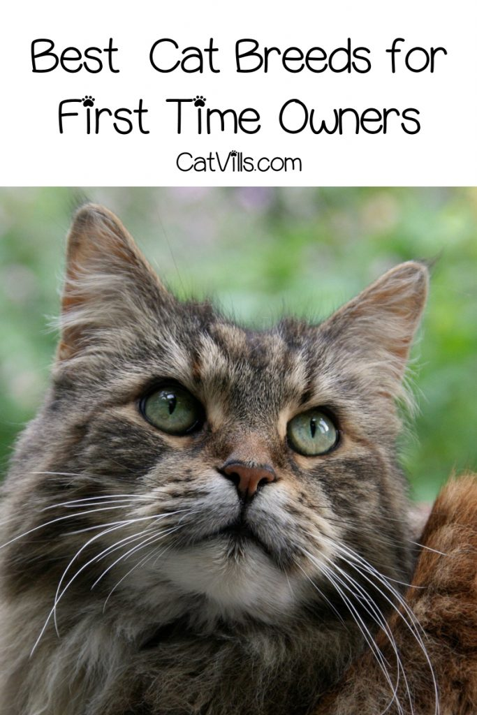 What are the best and worst cat breeds for first time owners? Read on to find out!