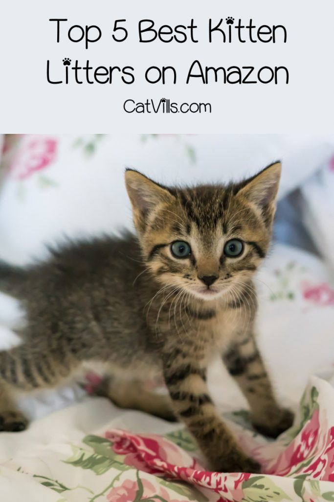 If you're looking for the best cat litter for kittens training to use the box (or wondering if they even need special litter), I've got your back! Check out our top 10 favorites!