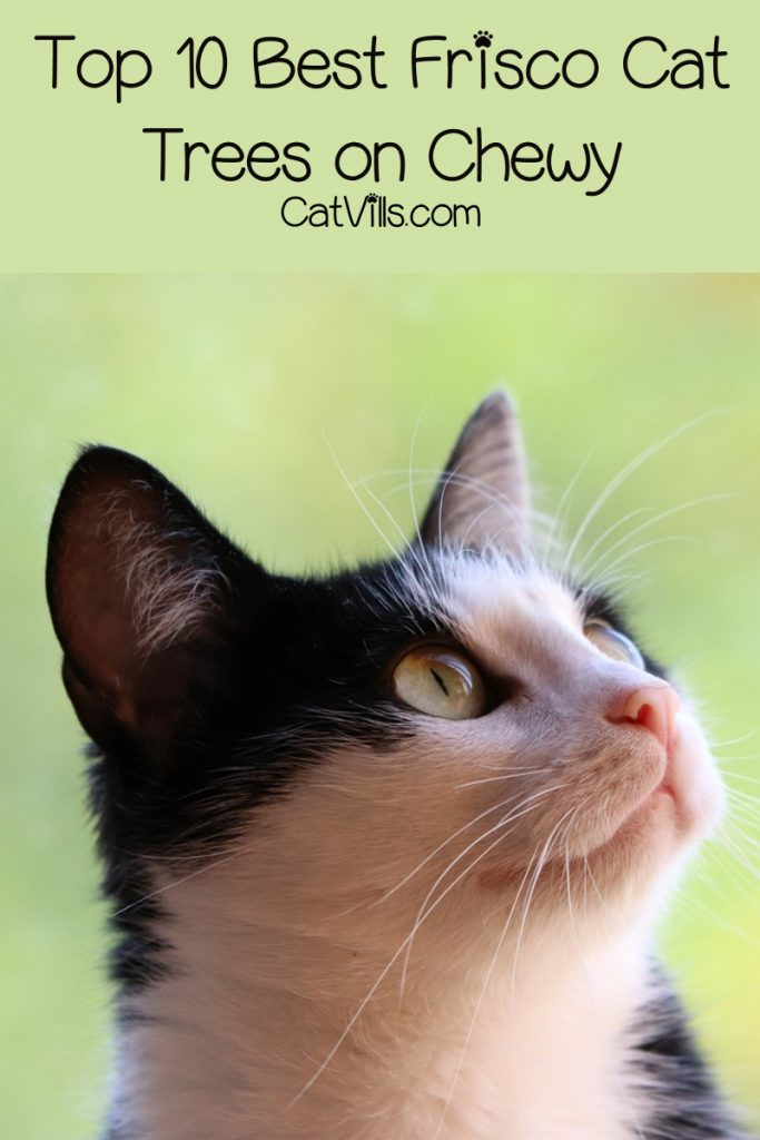 If you're looking for budget-friendly kitty furniture, you'll want to check out our Frisco cat trees reviews.