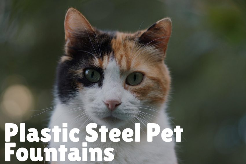 Plastic Pet Fountains Pros and Cons