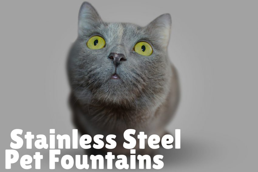 Pros and Cons of Stainless Steel Pet Fountains
