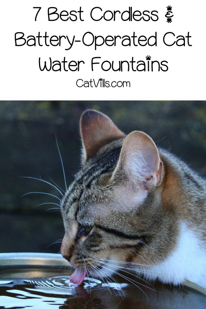Tired of reading lists of battery-operated cat water fountains that have everything but what they actually promise? Check out our short (but legit) list!