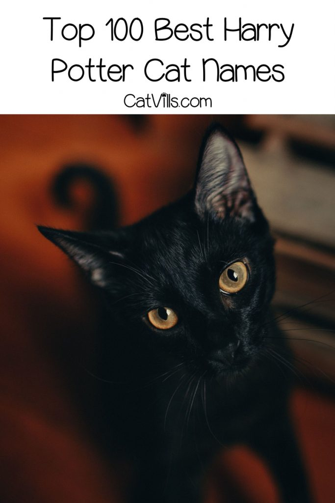Hey there, Wizarding World fan, I hear you're looking for Harry Potter cat names! Check out 100 that we love!