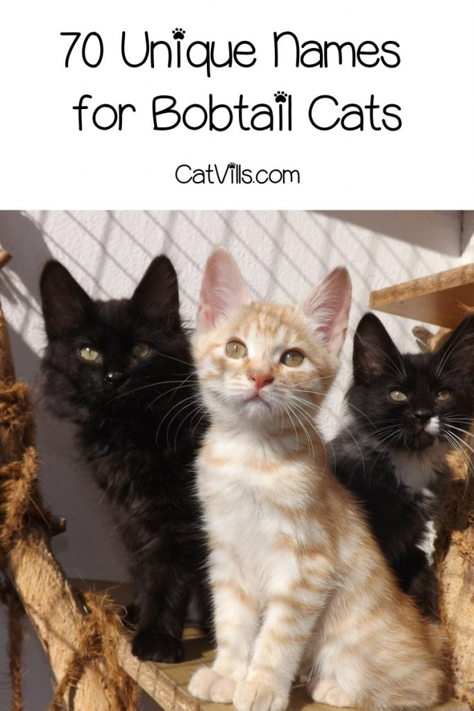 If you're searching for the best male and female names for bobtail cats, we've got you covered! Check out 70 darling ideas!