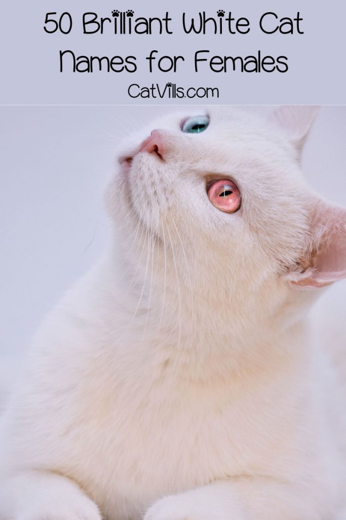 Looking for white cat names that are as brilliant as your new kitty? We've got you covered! Check out 50 fantastic ideas for male cats, then read on for female ideas!