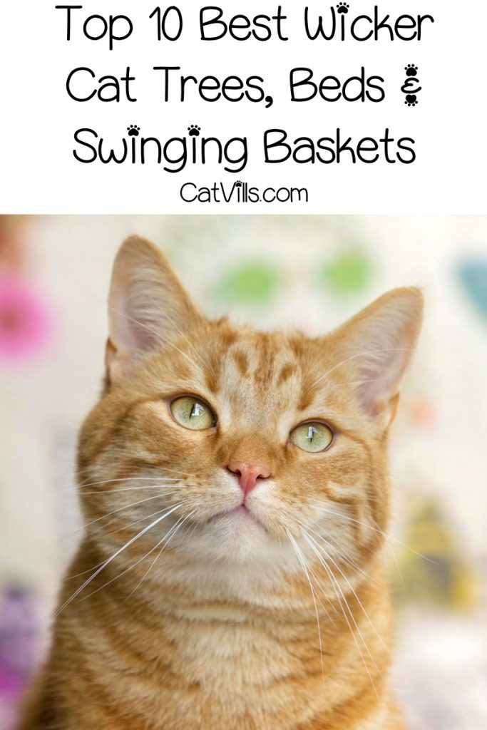 If you're looking for wicker cat trees or swinging cat beds, you'll love our list! Check out 10 beautiful pieces of cat furniture made of wicker!