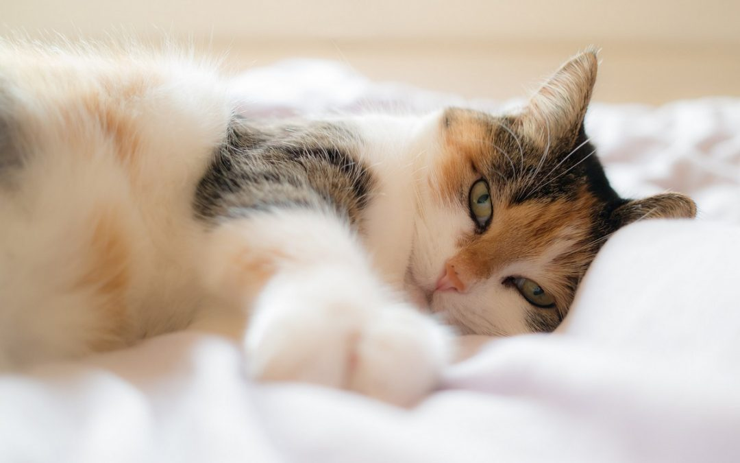Why Does My Cat Dig On My Bed? [How to Prevent it]