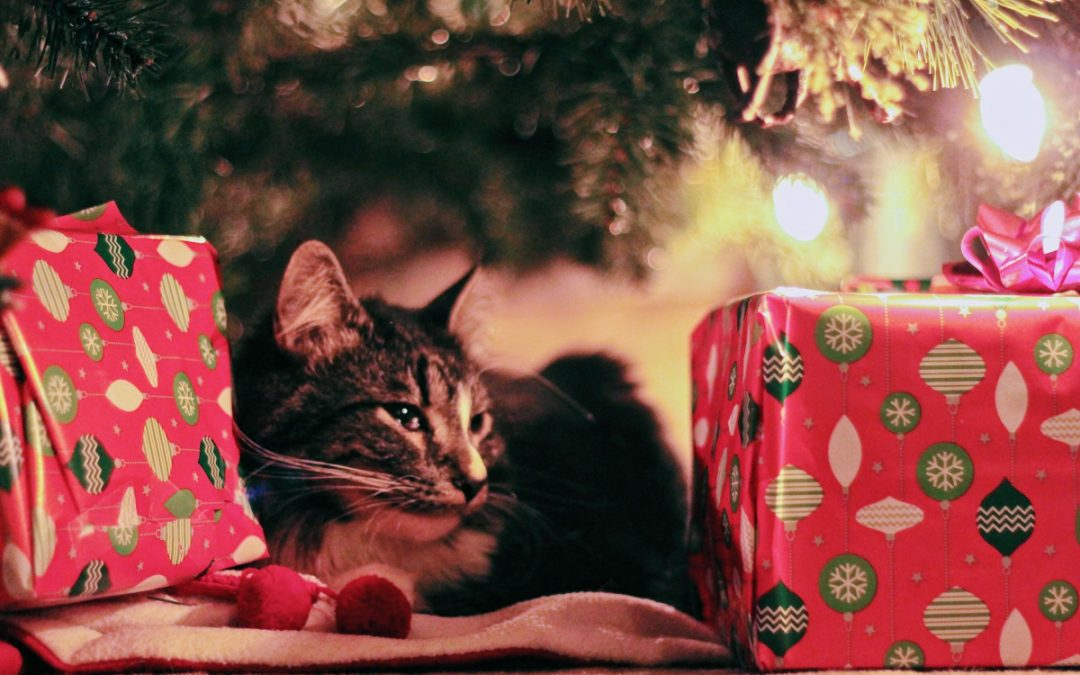 The Hottest Black Friday & Cyber Monday Sales for Cats