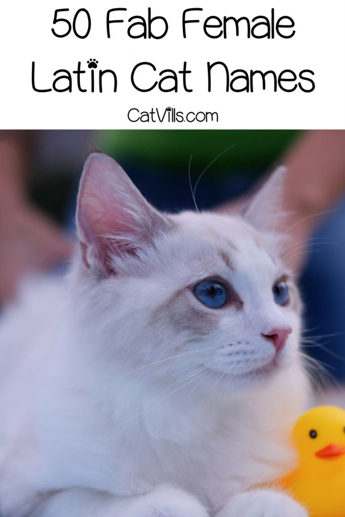 If you're looking for beautiful Latin names for cats, take a peek at our list! We rounded up 100 lovely ideas for males & females!