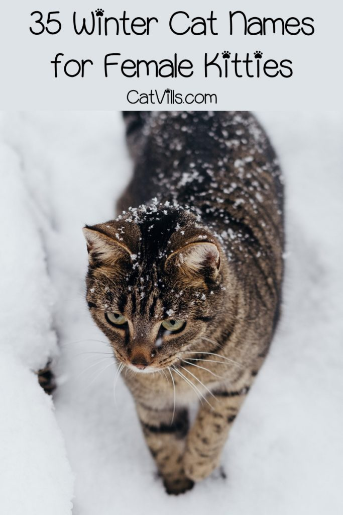 Looking for the best winter cat names for your newest feline friend? We've got you covered! Check out 35 that we love for girls, then keep reading for boy names, too!