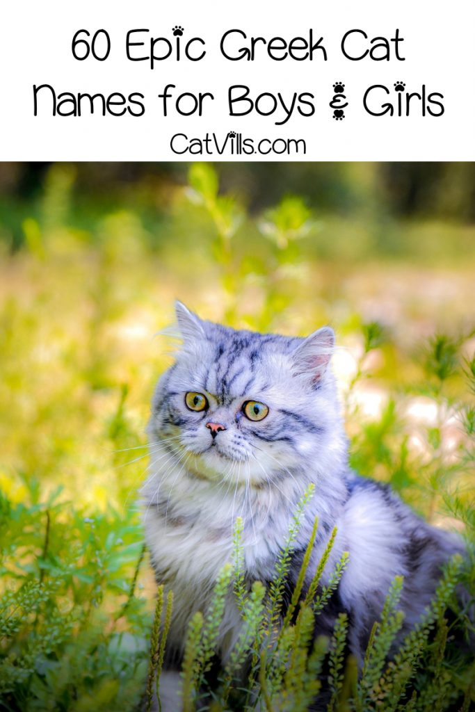 Looking for the most epic Greek cat names for male & female kitties? Check out our list loaded with 60 brilliant ideas!