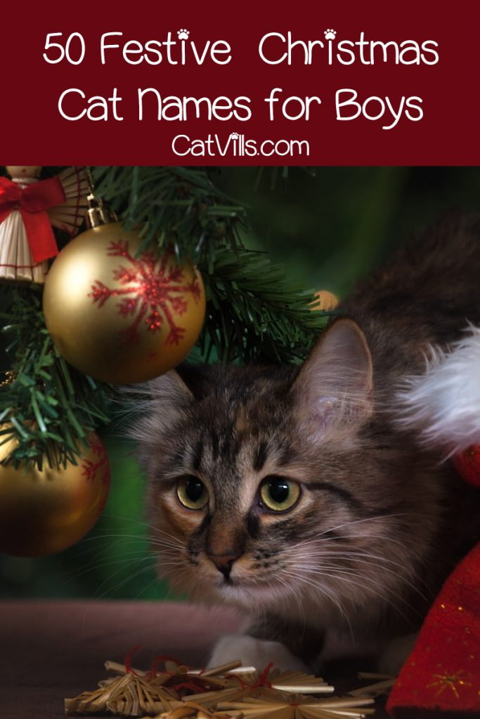 If you're looking for the perfect Christmas cat names for your winter-born kitty, you're in luck! Check out 100 ideas, with 50 each for males & females!