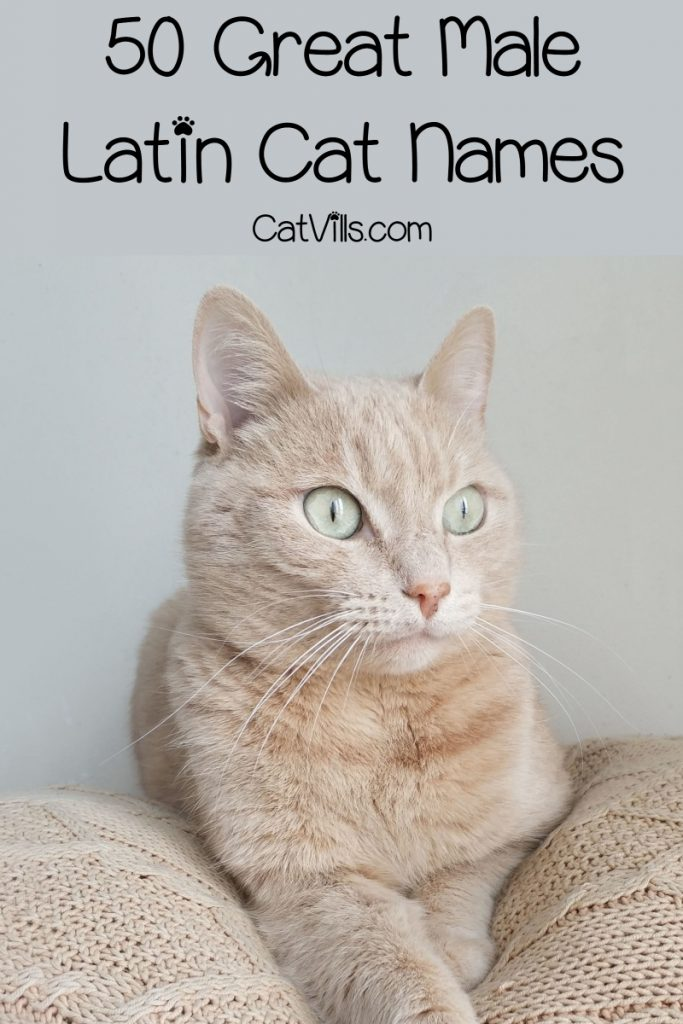 If you're looking for beautiful male Latin names for cats, take a peek at our list! We rounded up 50 great ideas!