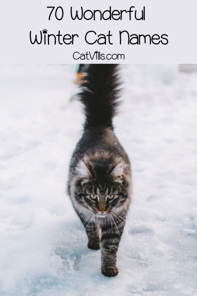 Looking for the best winter cat names for your newest feline friend? We've got you covered! Check out 70 that we adore for both males and females!