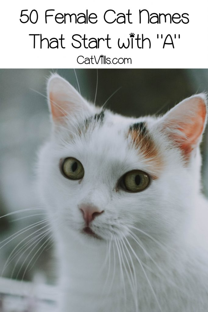 What are the best cat names starting with a? That's what we'll explore today! Take a look at 100 fantastic ideas for boys and girls!
