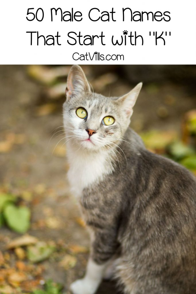 If you're looking for cute cat names that start with K, you'll love our top 100 list! Read on for 50 each for male and female kittens!