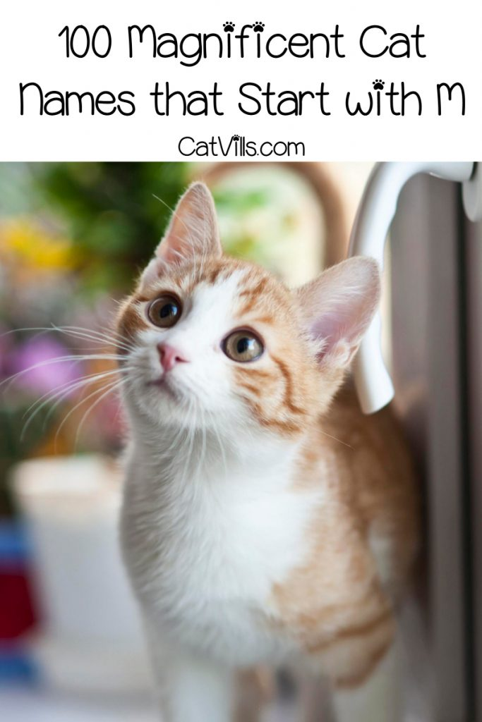 If you're having a hard time choosing a moniker for your kitty, why not go with cat names that start with M? Check out 100 that we love!