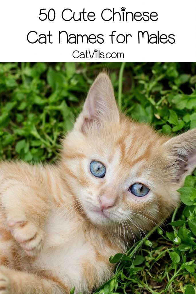 Looking for some of the most beautiful and meaningful Chinese cat name for male & female kittens? Check out 100 that we love for boys and girls!